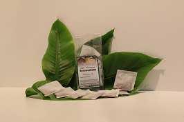 Verbena (Eisenkraut), odoratae 40 Btl.